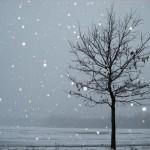 parenting, MKs, and seasons