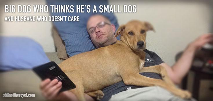 Big dog who thinks he's a small dog