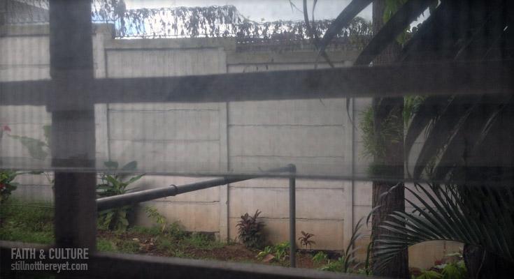 Wall outside my window