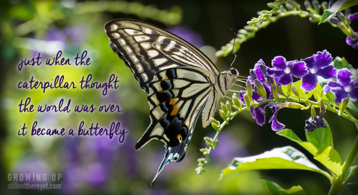 just when the caterpillar thought the world was over, it became a butterfly (Photo courtesy of Iskra Photo)